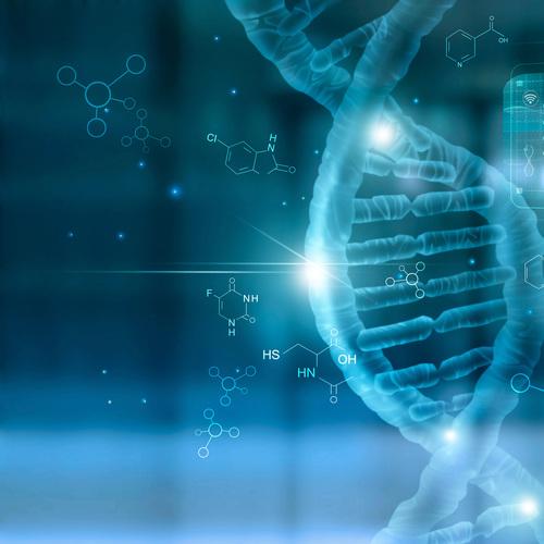 ADN - Contient les informations génétiques